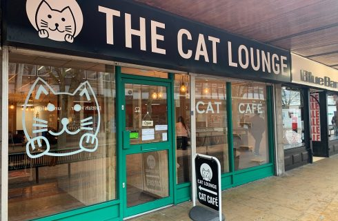 The Cat Lounge